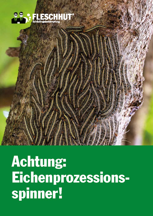 Eichenprozessionsspinnerbroschüre von Fleschhut Schädlingsbekämpfung zum Download